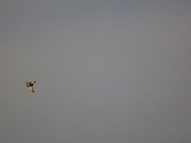 Gull flying out of view on left hand side of solid grey sky