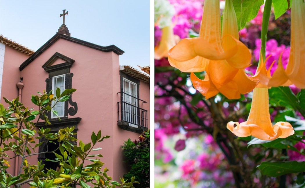 Tropical flowers in Funchal, Madeira
