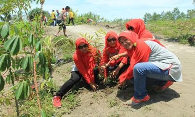 1000 Lebih Bibit Pohon Hijaukan Pantai Bopong