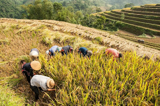Sapa – Mu Cang Chai – Hagiang Terraced Field Trail 9Days 8Nights 1