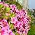 北九州市の花の季節@小倉南区八重洲