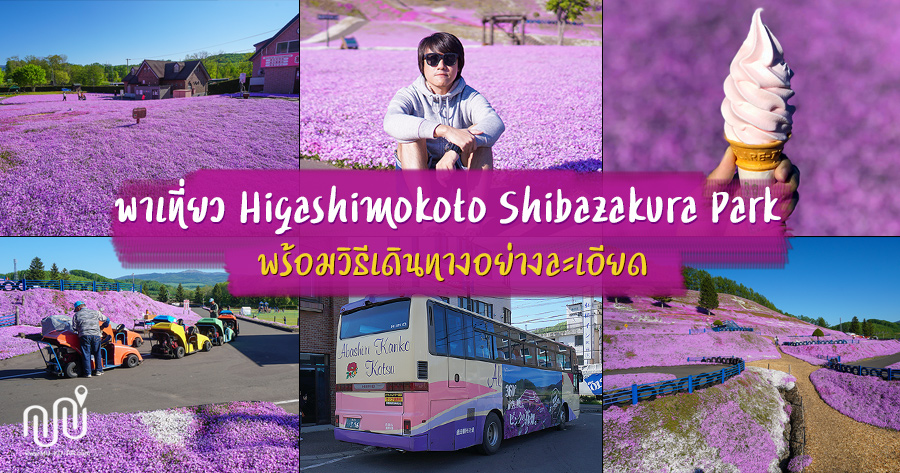 พาเที่ยว Higashimokoto Shibazakura Park ชมพิงค์มอส พร้อมวิธีเดินทางอย่างละเอียด