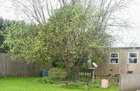 Overgrown garden space