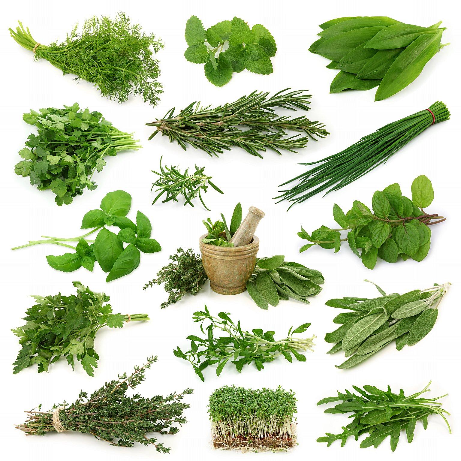 essay on medicinal plants of medicinal plants thesis psychology lifespan development essay