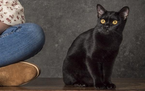 'O Sétimo Guardião': conheça a história do misterioso gato León (Foto: João Cotta/Globo)
