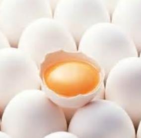 Dalam Usaha Peternakan ayam pemenuhan Bibit yang berkualitas di tentukkan dari kualitas t Kabar Terbaru- CARA MENETASKAN TELUR AYAM KAMPUNG