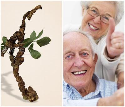 Sâm Ngọc Linh có công dụng làm giảm sự già hóa, điều hóa nhịp tim