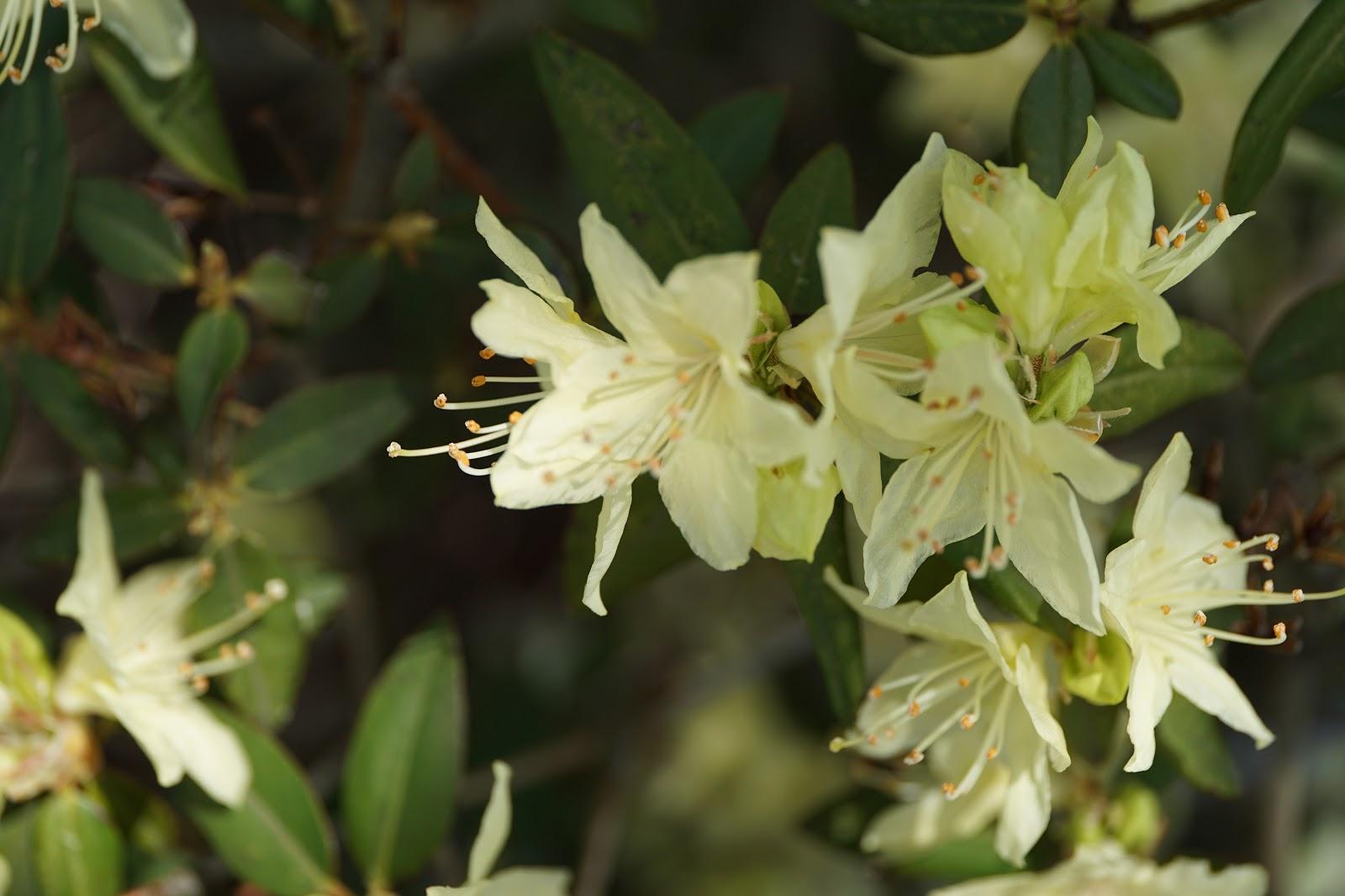 些細な日常の花の写真