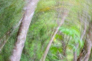 icm photo of trees
