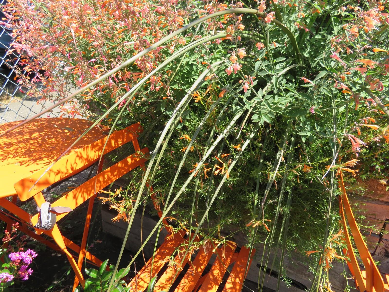 Nursery Visit Xera Plants