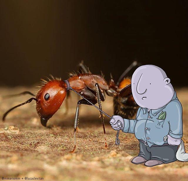 foto unik lucu kreatif dan inovatif foto asli yang dipadukan dengan kartun-3