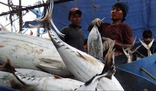 Bisnis Ekspor Ikan Laut