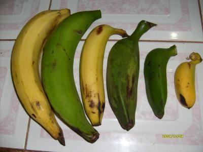 Bananos, plátanos, maduros y cuadrados