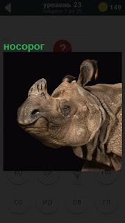 Половина носорога, морда с большим рогом и улыбкой