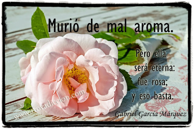 Murió de mal aroma. Pero ella será eterna: fue rosa; y eso basta.