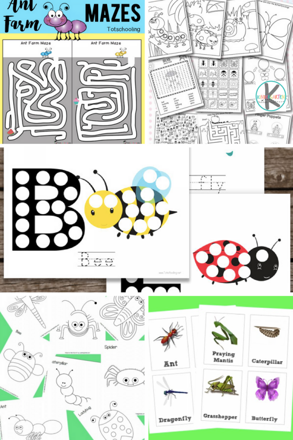Kindergarten Worksheets and Games: 28 FREE Insect Worksheets