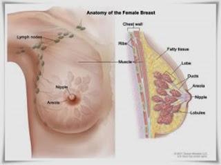mengobati kanker payudara dengan pijatan, cara mengobati kanker payudara, bahan alami obat kanker payudara, harga obat herbal kanker payudara, kanker payudara indonesia, kanker payudara dan obatnya, cara menyembuhkan kanker payudara, ramuan herbal buat kanker payudara, cara pengobatan kanker payudara stadium 4, obat kanker payudara ganas, kanker payudara laki-laki, artikel kanker payudara pada pria, cara membuat obat kanker payudara dengan daun sirsak, pengobatan kanker payudara awal, www.obat herbal kanker payudara.com, obat kanker payudara akut, kanker payudara dan obat nya, kanker payudara nyeri punggung, makanan untuk menyembuhkan kanker payudara, penanganan kanker payudara stadium 3, kanker payudara stadium 4 lanjut, obat kanker payudara ampuh, kanker payudara gejala awal, kanker payudara yang menyebar ke otak, kanker payudara.org, kanker payudara doc, jus obat kanker payudara