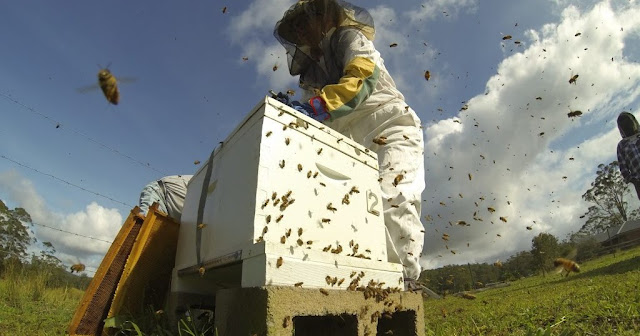 Αντιδράσεις μελισσοκόμων για την 20ετη απαγόρευση μελισσοσμηνών στην περιοχή του Φαρμακά Αργολίδας