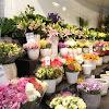 Toko Bunga Mawar di Medan Jual Aneka Macam Bunga Mawar
