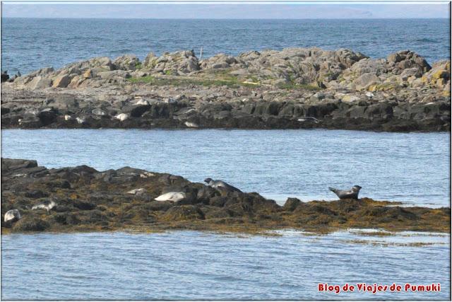 Cerca de Hindisvik es posible ver colonias de focas en rocas frente a la costa