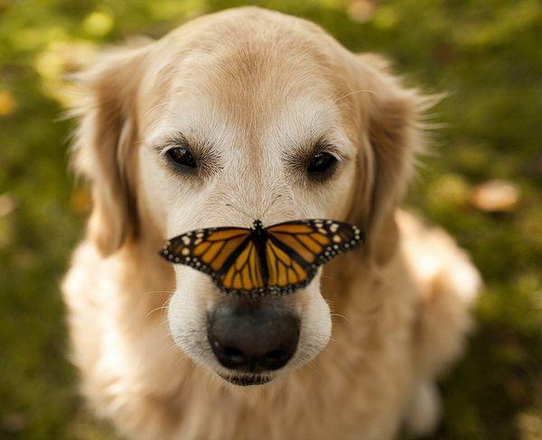 Un perro con una mariposa en la punta de la nariz
