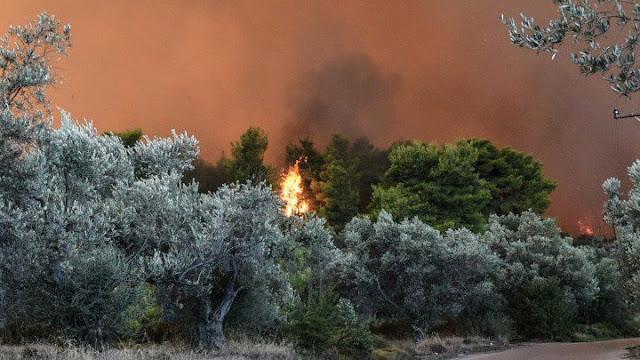 Φωτιά σε δασική έκταση στο νησί της Αίγινας