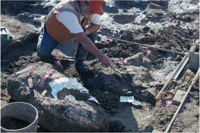 Ανάλυση αρχαίων οστών επιχειρεί να ξαναγράψει την ιστορία της Αμερικής