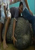 El cocodrilo gigante de filipinas