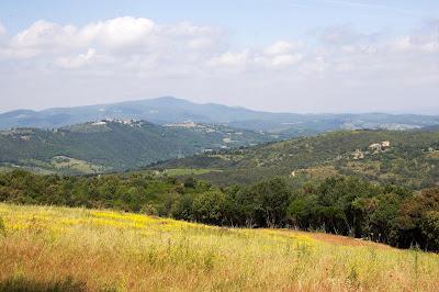 biodiversità vigne montecucco