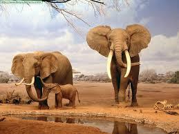 Imagen familia elefantes