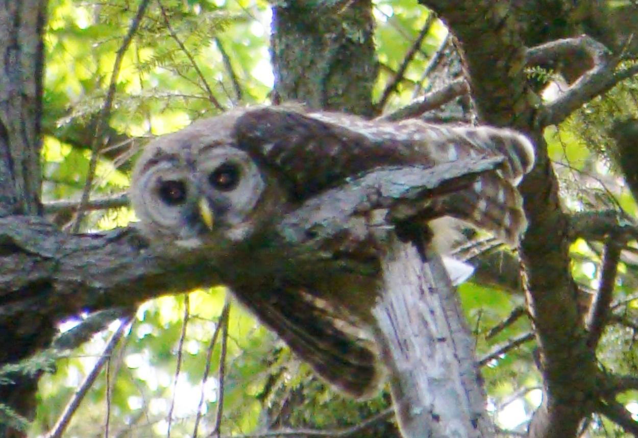 Ilmu Pengetahuan 7 Baby Snowy Owl Sleeping Face Down