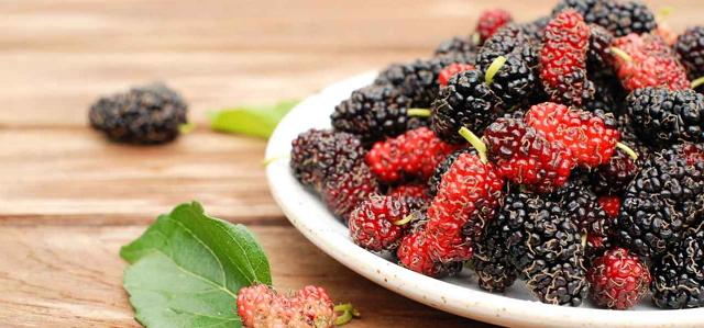 tanaman hias buah mulberry