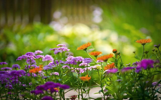 Lente achtergrond met bloemen in bloei