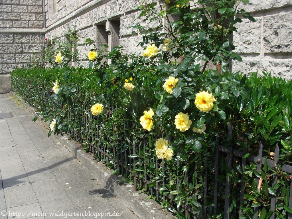 mein waldgarten auf die neuen rosen bin ich unheimlich gespannt. Black Bedroom Furniture Sets. Home Design Ideas