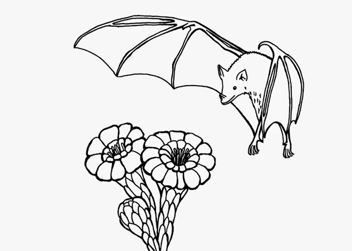 fruit bat coloring pages - photo#2