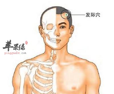 發際穴位 | 發際痛位置 - 穴道按摩經絡圖解 | Source:pingguolv.com