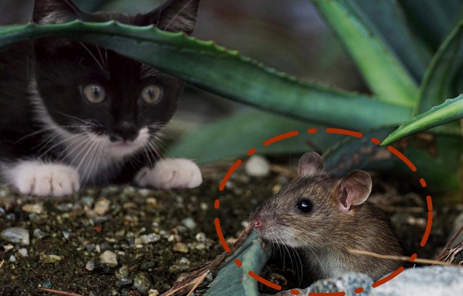14 Ciri-Ciri Tikus