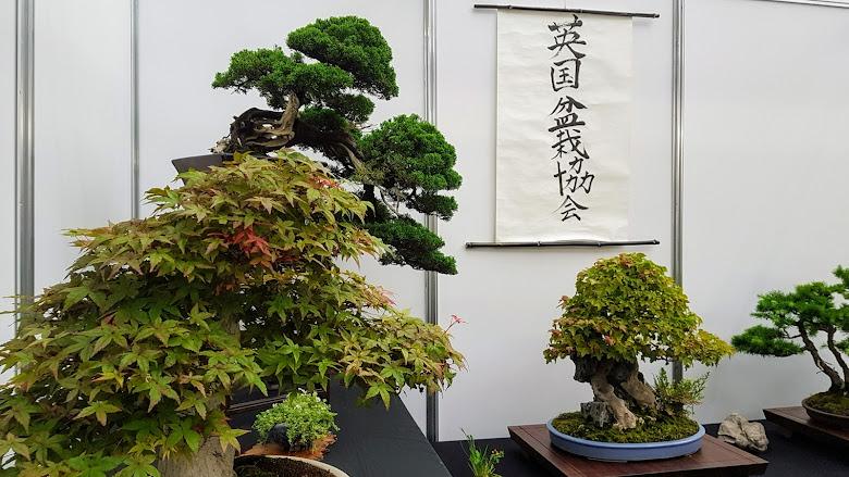 英國盆栽協會 Bonsai