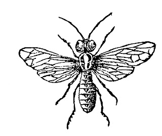 wasp insect illustration bug clipart digital stamp download
