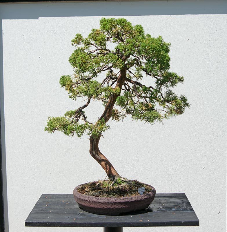 walter pall bonsai adventures bonsai zentrum heidelberg. Black Bedroom Furniture Sets. Home Design Ideas