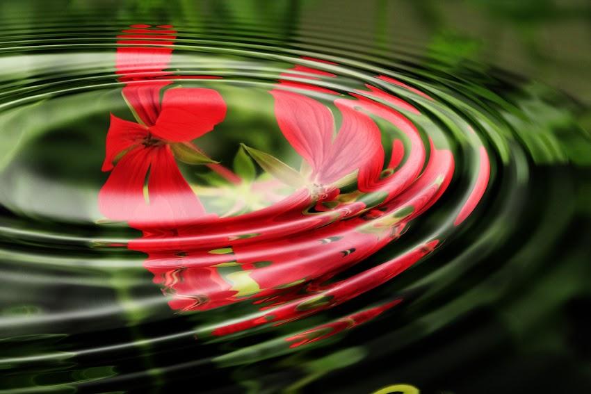 Geranium Wave Water Rings