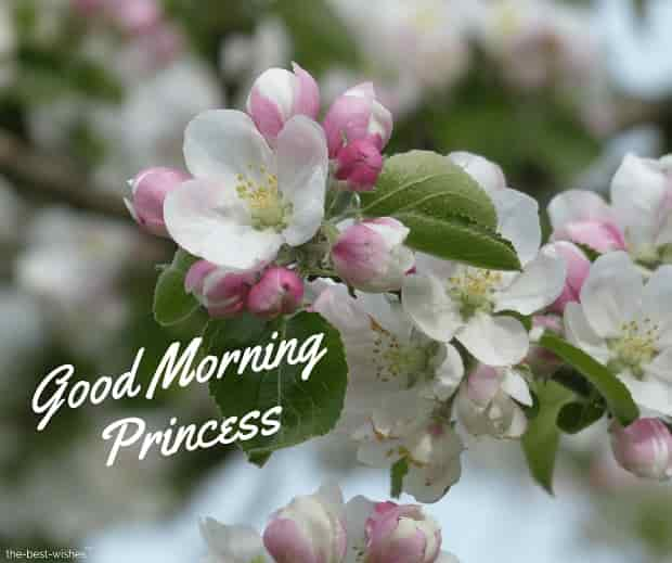 good morning princess wishes