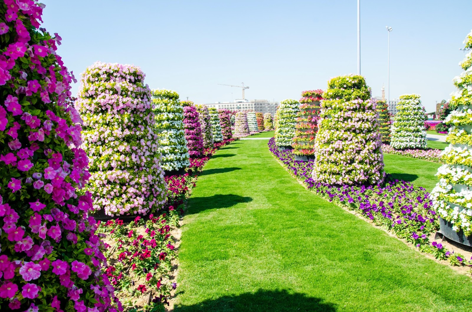 Dubai Miracle Garden Desktop Wallpaper 1600 X 1059 Flower Wallpaper