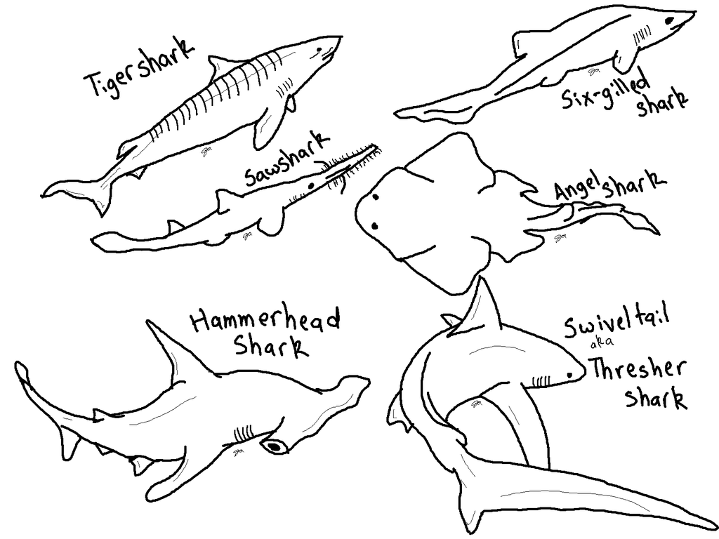 Hammerhead shark pictures to color for Hammerhead shark coloring pages