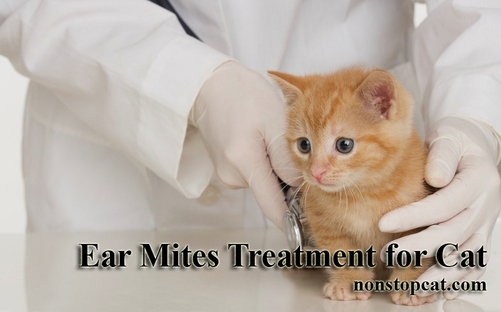 Ear Mites Treatment for Cat