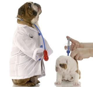 vacunemos a nuestros cachorros