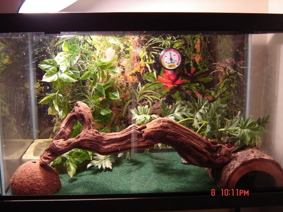Note How To Create A Snake Vivarium Nana Nine Pets World Sdn Bhd