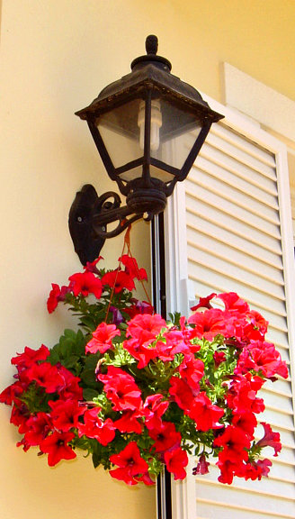 Petunias on the Porch