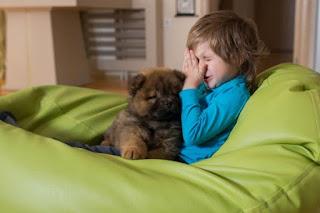Cuando busque un perro hipoalergénico, tendrá que decidir sobre una raza de perro y cómo el perro se adaptará a su estilo de vida.