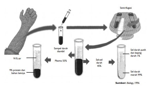 Sistem Peredaran Darah pada Manusia - IPA Kelas 8